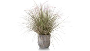 Coco Maison Gras Pennisetum39124-ROZ